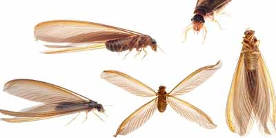 Termite Control Fort Lauderdale